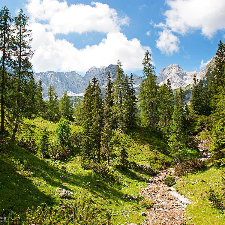 Eine Landschaft mit einem steilen Weg zum Wald und Bergen im Hintergrund dabei scheint die Sonne auf die Landschaft